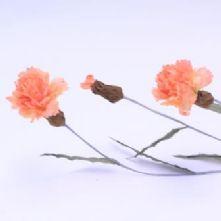 Vintage Peach Carnations